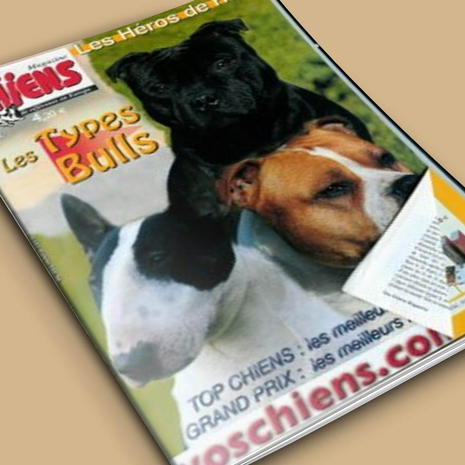 Vos Chiens magazine 282