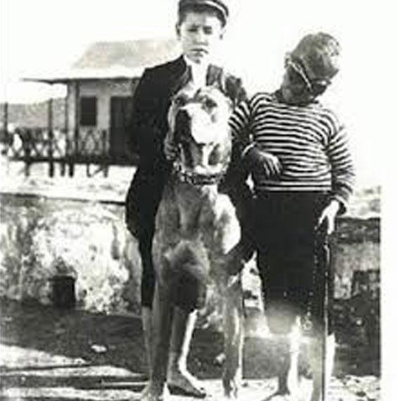 Vielle photo de l'époque avec un Alano Espagnol
